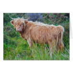 Young Highland Cow Card