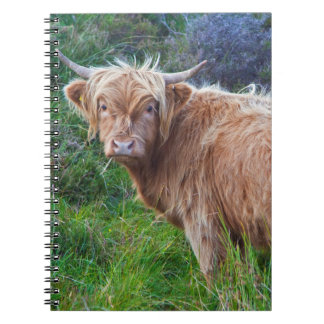 Young Highland Cow Notebook