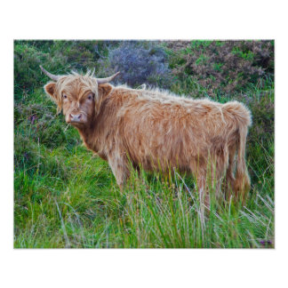 Young Highland Cow Print