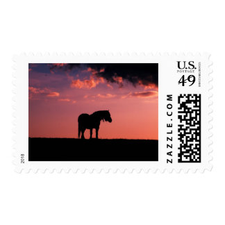 Young horse in the beautiful Scottish sunset Stamps