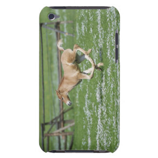 Young Horse Running iPod Touch Case