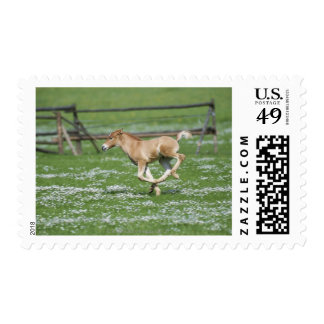 Young Horse Running Stamps
