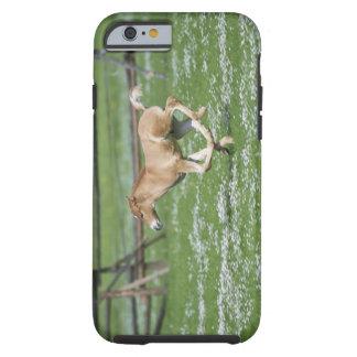 Young Horse Running Tough iPhone 6 Case