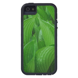Young Hostas with Raindrops Case For iPhone SE/5/5s