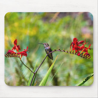 Young Hummingbird perched on stalk of flowers Mouse Pad