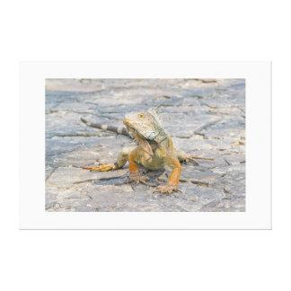 Young Iguana Canvas Print