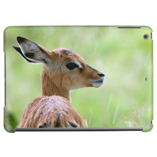 Young Impala (Aepyceros Melampus) Foal Portrait Cover For iPad Air