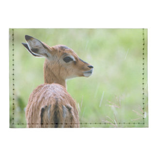 Young Impala (Aepyceros Melampus) Foal Portrait Tyvek® Card Case Wallet