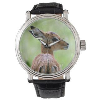 Young Impala (Aepyceros Melampus) Foal Portrait Wristwatch