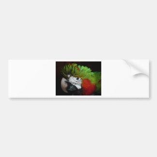 Young Jubilee macaw Bumper Sticker
