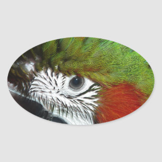 Young Jubilee macaw Oval Sticker