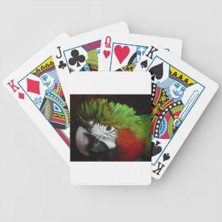 Young Jubilee macaw Card Decks