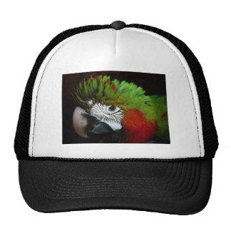 Young Jubilee macaw Trucker Hat