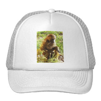 Young Juvenile Baboon Sitting and Looking Down Mesh Hat