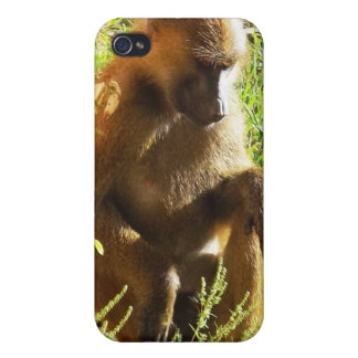 Young Juvenile Baboon Sitting and Looking Down iPhone 4/4S Case