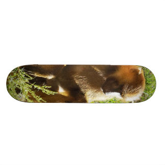 Young Juvenile Baboon Sitting and Looking Down Skateboard Deck