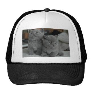 young kitten pet purr meow kitty cute cat mesh hats