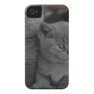 young kitten pet purr meow kitty cute cat iPhone 4 Case-Mate case