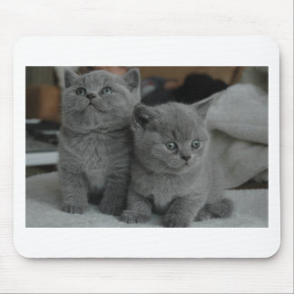 young kitten pet purr meow kitty cute cat mouse pad