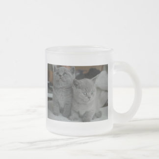 young kitten pet purr meow kitty cute cat 10 oz frosted glass coffee mug