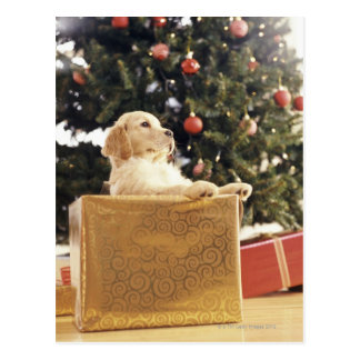Young Labrador Leaning on a Christmas Present Postcard