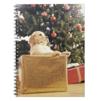 Young Labrador Leaning on a Christmas Present Spiral Note Books
