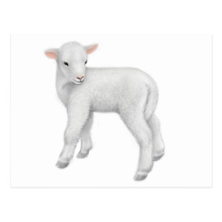 Young Lamb Postcard