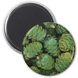 Young larch cones refrigerator magnet