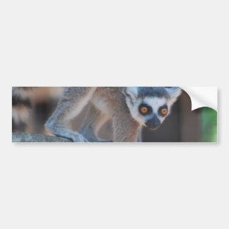 Young Lemur Bumper Sticker
