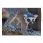 Young Lemur Greeting Card