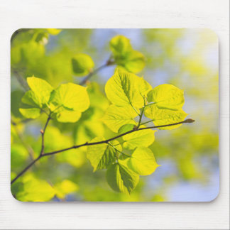 Young Linden Leaves Mouse Pad