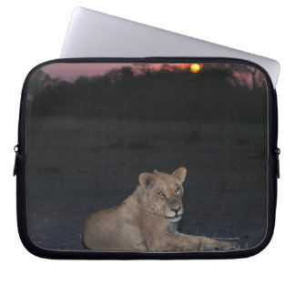 Young Lion at Sunrise Computer Sleeves