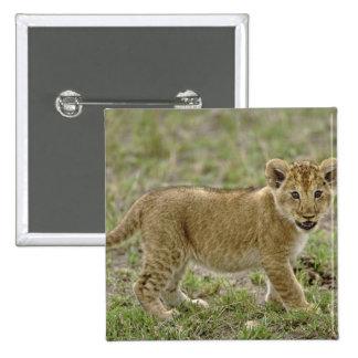 Young lion cub, Masai Mara Game Reserve, Kenya Button