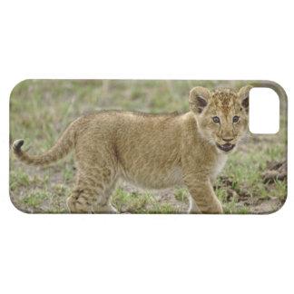 Young lion cub, Masai Mara Game Reserve, Kenya iPhone SE/5/5s Case