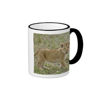 Young lion cub, Masai Mara Game Reserve, Kenya Ringer Coffee Mug