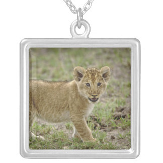 Young lion cub, Masai Mara Game Reserve, Kenya Jewelry