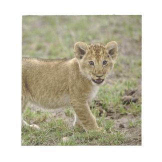 Young lion cub, Masai Mara Game Reserve, Kenya Notepad