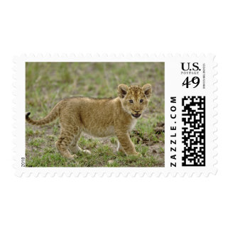 Young lion cub Masai Mara Game Reserve Kenya Stamps