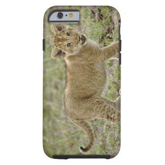 Young lion cub, Masai Mara Game Reserve, Kenya Tough iPhone 6 Case