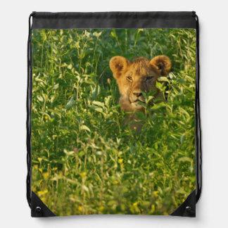 Young Lion (Panthera Leo) Stalking, Ngorongoro Drawstring Backpack