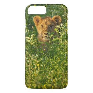Young Lion (Panthera Leo) Stalking, Ngorongoro iPhone 8 Plus/7 Plus Case