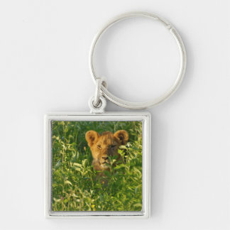 Young Lion (Panthera Leo) Stalking, Ngorongoro Keychain