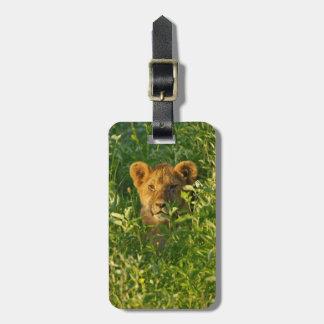 Young Lion (Panthera Leo) Stalking, Ngorongoro Luggage Tag