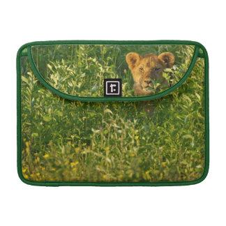 Young Lion (Panthera Leo) Stalking, Ngorongoro MacBook Pro Sleeve