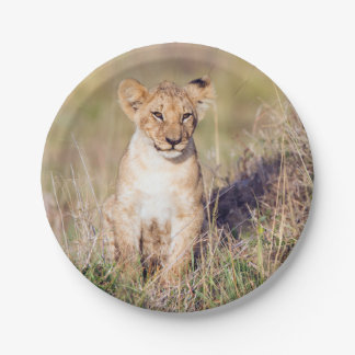 Young lion paper plate