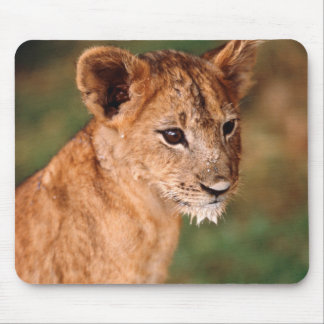 Young lion sitting mouse pad