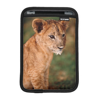 Young lion sitting sleeve for iPad mini