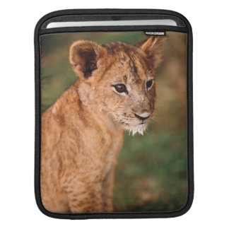 Young lion sitting sleeve for iPads