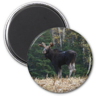 Young   2 inch round magnet
