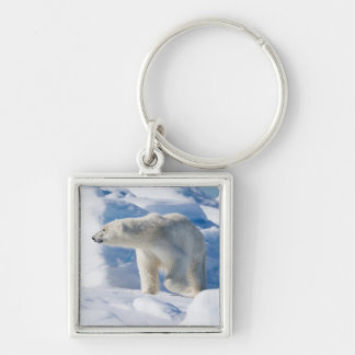 Young Male Polar Bear Keychain